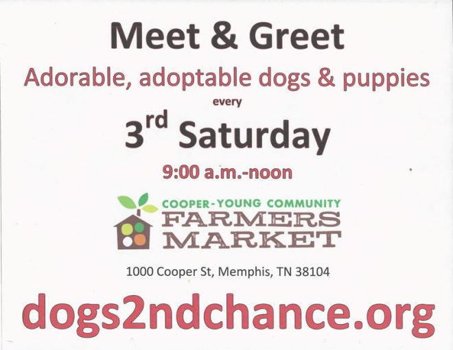 Meet dogs for adoption
