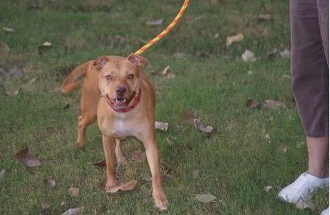Adoptable Dog Amber 3
