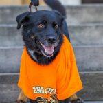 Adopt dog Casey Lee 1