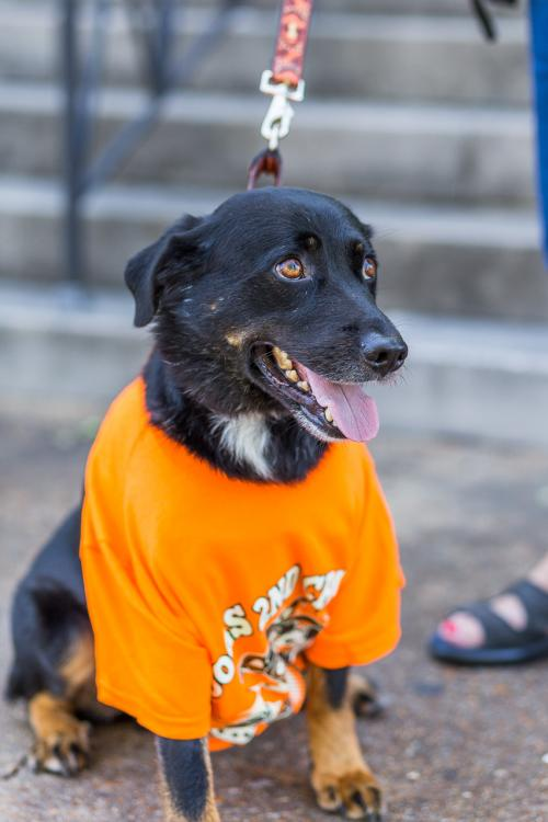 Adopt dog Casey Lee 2