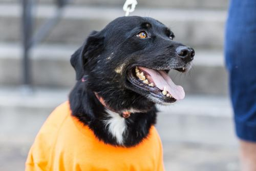 Adopt dog Casey Lee 3