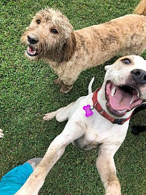 Adopt Clyde: Clyde with Friend