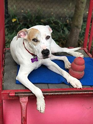 Adopt Clyde: Clyde with Kong Toy