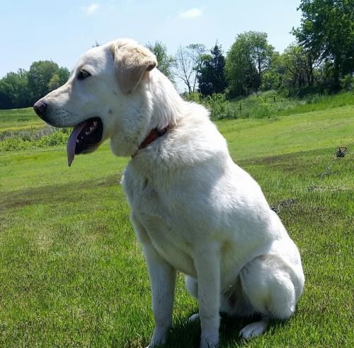 NH adoptable dog Cooper 2