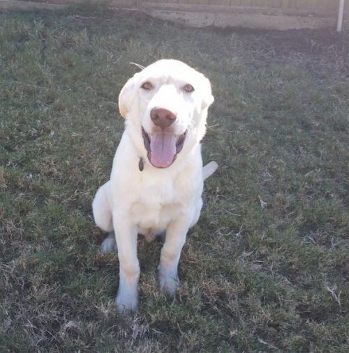 NH adoptable dog Cooper 3