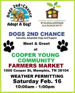 ADOPT A DOG Cooper Young Feb 16 2019