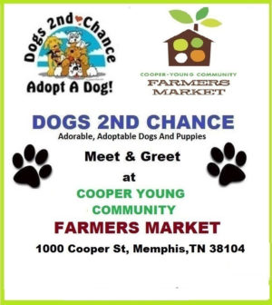 Meet dogs to adopt Cooper Young Memphis