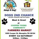 Adopt: Cooper Young Meet Dogs