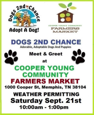 cooper young adoptable dog meet and greet