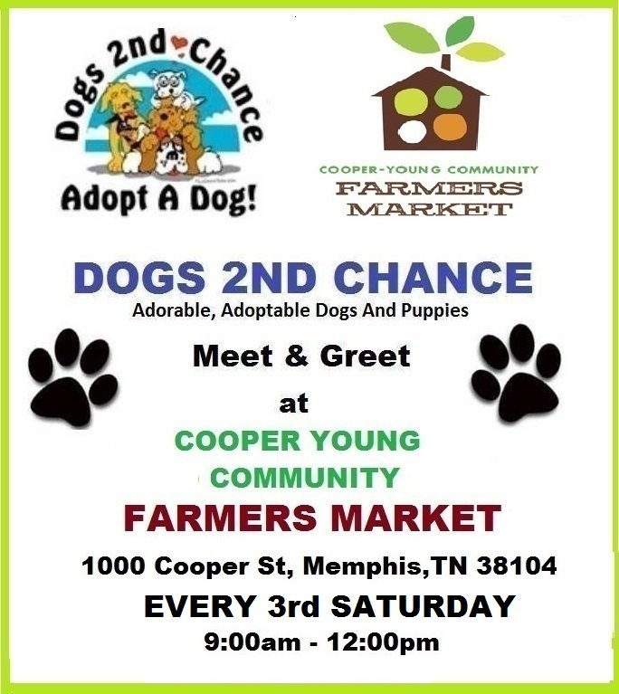 adopt dogs Cooper Young Every Third Sat
