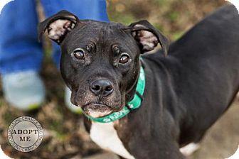 adopt demi dog 1