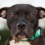 adopt demi in New Hampshire