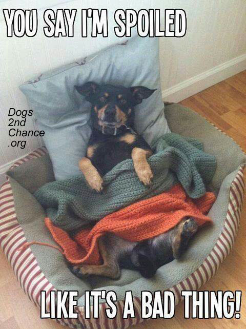 Spoiled dog.