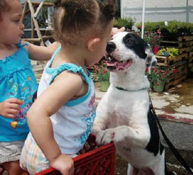 Help children interact with dogs