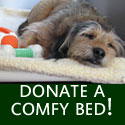 Donate a dog bed