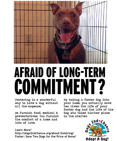 Fostering dogs saves two lives. The one in your home, and the one who takes his place in the shelter!