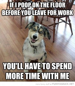 funny-overlly-attached-dog-poop-floor-leave-work-spend-more-time-pics