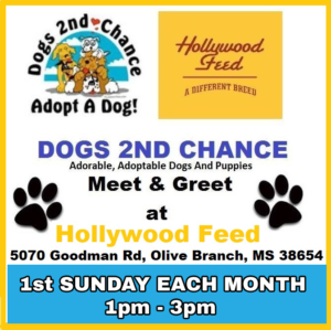 Hollywood Feed Dog Adoption Event 1st Sunday Each Month 1pm-4pm