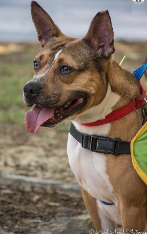 houston is dog of the month 4