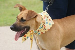 Adopt Lilly Belle dog