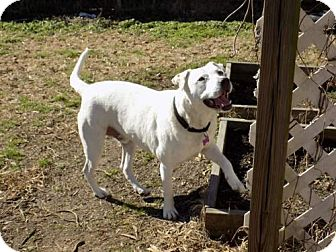 adopt dog linus tn, nh, ma, ct, pa, va