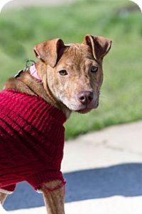 Adopt dog Loralee