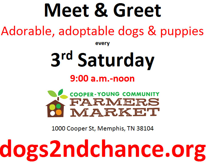 MEET AND GREET DOGS AND PUPPIES