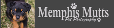 Memphis Mutts Photography