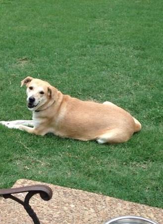 Momma Rosie dog available adoption