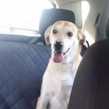 Momma Rosie 2 dog available adoption