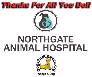 Thank you northgate vet