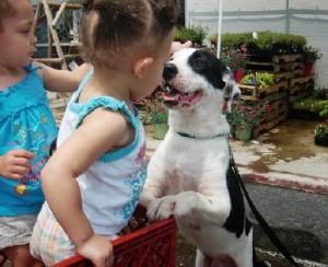 Oreo adoptable dog
