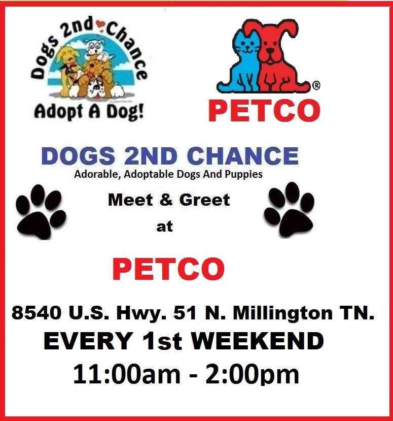 meet adoptable dogs at petco