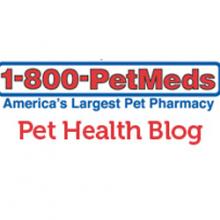 Petmeds Blog
