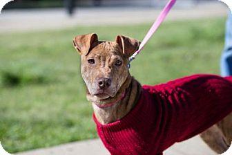 adoptable dog Massachusetts, Tennessee