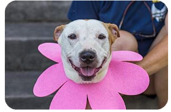 Adopt dog Sunny
