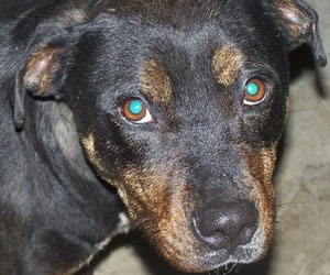 Tyler: A Dogs 2nd Chance Dog