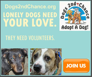 Become a dog rescue volunteer